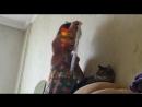 Гонится за кошкой