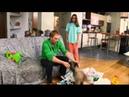 ДаЁшь МолодЁжь! - Молодая семья Валера и Таня - Собака
