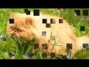 V мой миленький хорошенький мой котик