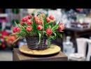 Корзина розовых пионовидных тюльпанов