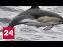 Как не согрешить с дельфином: межвидовой мезальянс глазами науки - Россия 24