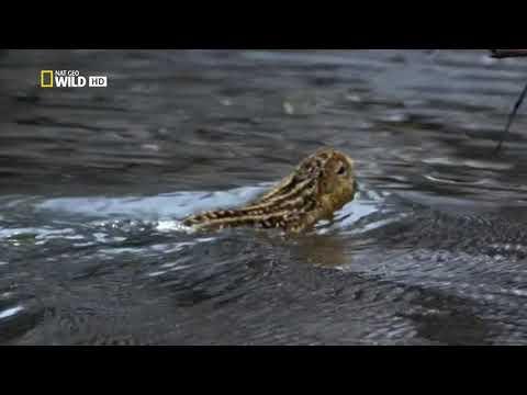 Дикая природа Миссисипи / 2 Серия - Великий потоп