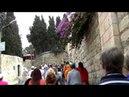 Израиль Иерусалим экускурсия в Гефсиманский сад