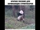 Панда стриптизёр