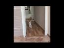 Эксперимент над котом VIDEO ВАРЕНЬЕ