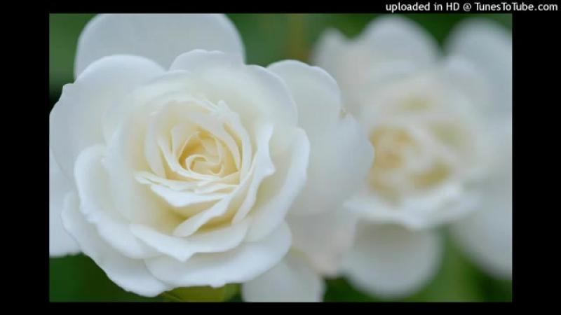 волга-волга-белые-розы-volgavolga-belye-rozy-hd-nclip-scscscrp