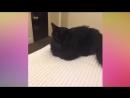 Смешные видео про котов и собак