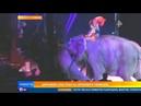 Цирковой слон упал на зрителей во время представления