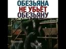 _clapper_ _ «Планета обезьян_ Революция» Подпишись на @varenitv - varenitv 750 X 750 .mp4