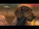 National Geographic Жизнь до рождения Собаки - In The Womb Dogs 2009