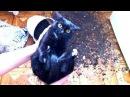 Приколы с кошками и котами 13. Подборка смешных и интересных видео с котиками и кошечками