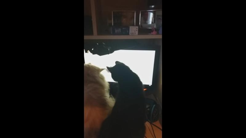 коты за мышкой коняют😃😃😃😃