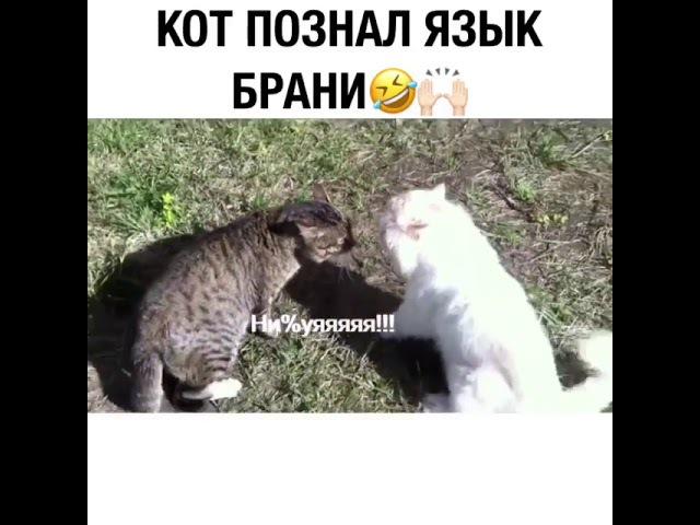 Кот познал язык брани