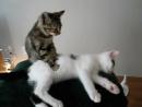 Всем приятного вечера 🤗🤗🤗😍 сон сладкий ночь котенок вместе милота милашка пушистик кошка cat кошк