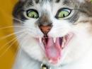 Приколы про кошек самые смешные