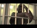 Prodigy Ft Sheek Louch Styles P Havoc Jadakiss All A Dream