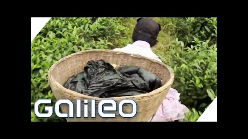 Luxus-Tee (Panda Tee)   Galileo   ProSieben