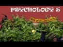 Психоделия 5