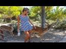 Испания Бенидорм   зоопарк Terra Natura   тигры , обезьяны , атака оленей !