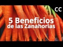 5 Beneficios de las Zanahorias   Ciencia de la Comida