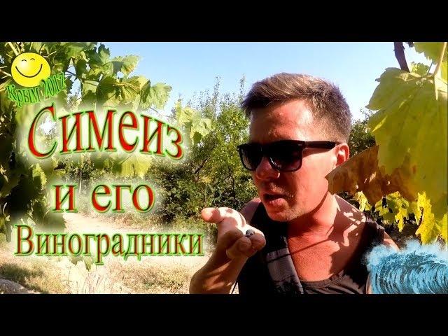 Симеиз, виноградники Крым 2017.