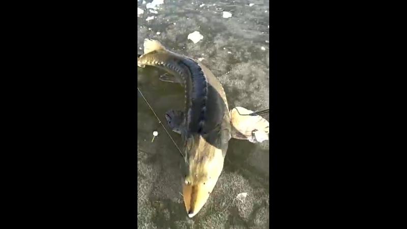Славная рыбалка