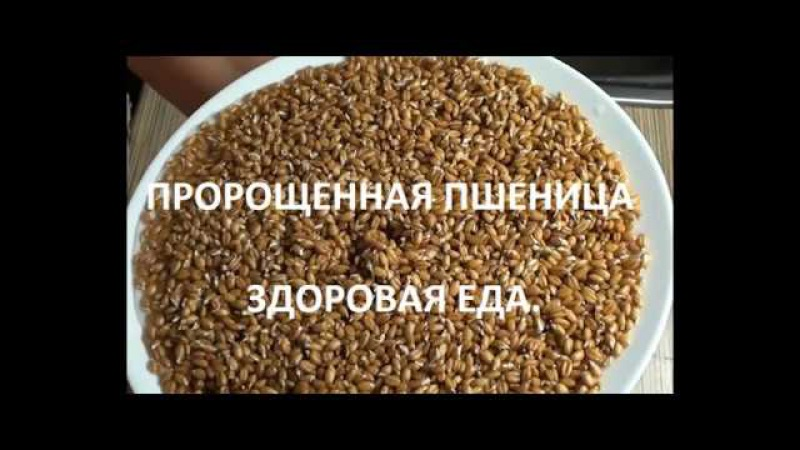 Проращиваем пшеницу и овес. Здоровая еда