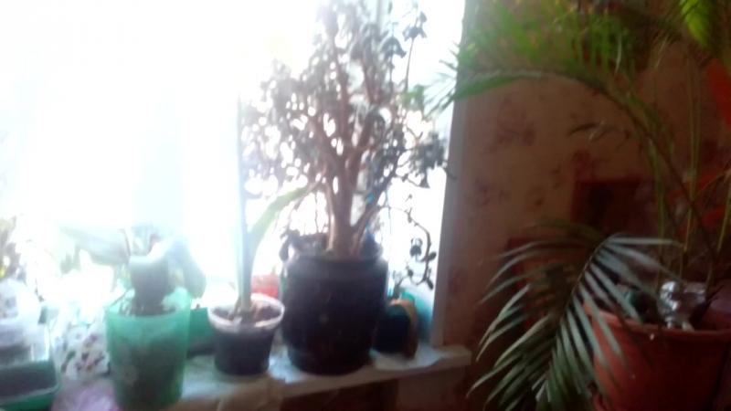 Котята (В Бабушкиной Комнате) II И Вид Из Окна