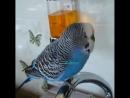 _scream__joy__bird_ Ставьте лайки _heart_️ Пишите комментарии _memo_ Делайте репост _video_camera_ Подписывайтесь н 640 X 640