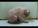 Mange and loneliness - a puppy's long way to an amazing recovery