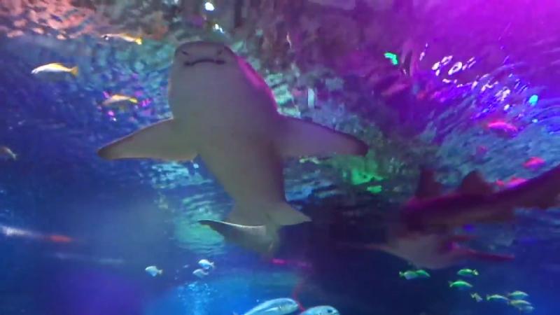 Океанариум Планета Нептун Санкт Петербург СПб Главный аквариум Подводный тоннель Акулы Рыбы Часть 1