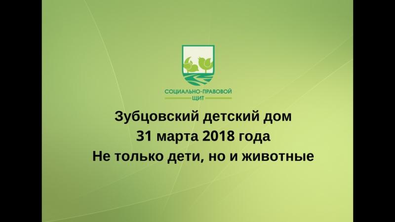 Жительница Зубцовского Детского Дома - Шиншилла