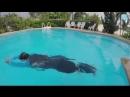 Плавание брассом_ учимся держать колени узко при толчке ногами! Для чего это делать и как_! ( 240 X 426 ).mp4