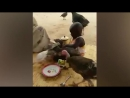 FUNNY Animals Trolling Babies and Kid - 5_ Funny Babies and Pets Compilation 720 X 1280 .mp4