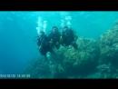 2018 год Красное море Дайвинг погружение 5