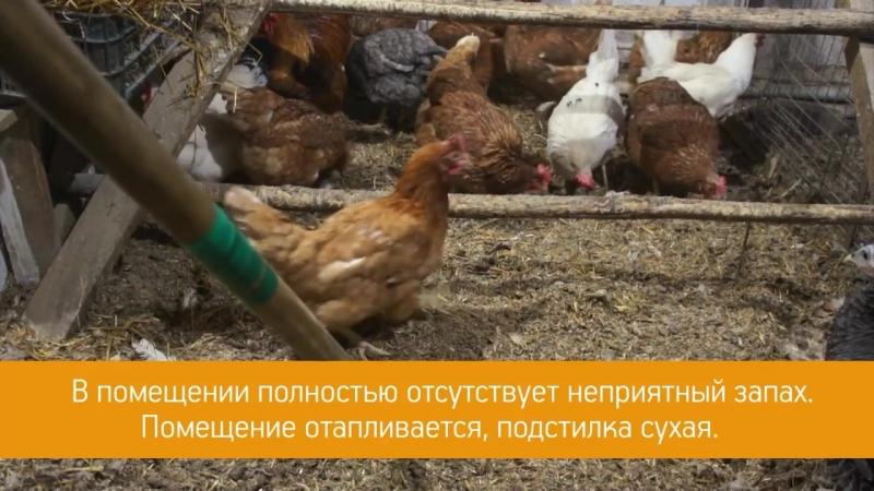 Применение Глубокой подстилки для птиц от LiveBacteria - Подстилка в курятнике. Часть 2.