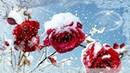 С ДНЕМ РОЖДЕНИЯ !Пусть даже в зимние морозы Вам всегда приносят розы !