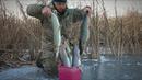 В ЭТОМ БОЛОТЕ МНОГО ЩУКИ. Атака щуки на живца. ПОДЛЁДНОЕ ВИДЕО. Зимняя рыбалка на жерлицы.