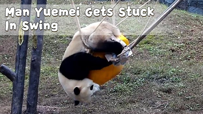 Man Yuemei Gets Stuck In Swing | iPanda