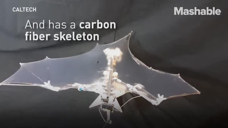 В США сделали дрон в форме летучей мыши, который может самостоятельно махать каждым крылом. Ох уж этот Запад, все что-то там д