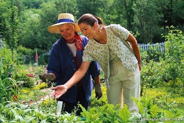 Основные заблуждения дачников Многие садоводы огородники следуют заповедям, которые передаются «знатоками» из уст в уста, из поколения в поколение. За своими грядками они следят неустанно,