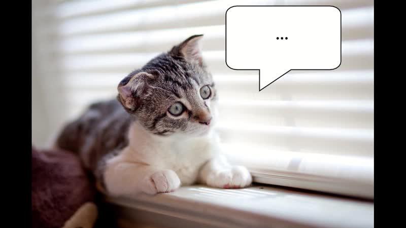 Котенок и сомнения. Жалюзи Маркет.