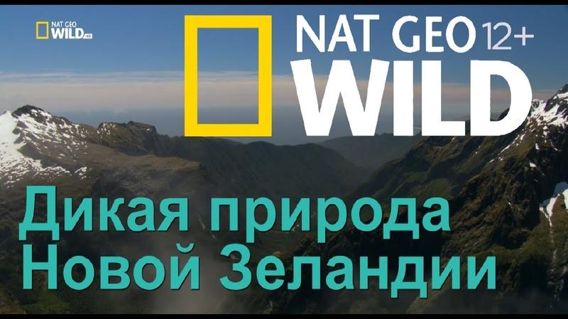 Nat Geo Wild Дикая природа Новой Зеландии затерянный рай Wild New Zealand. Lost Paradise