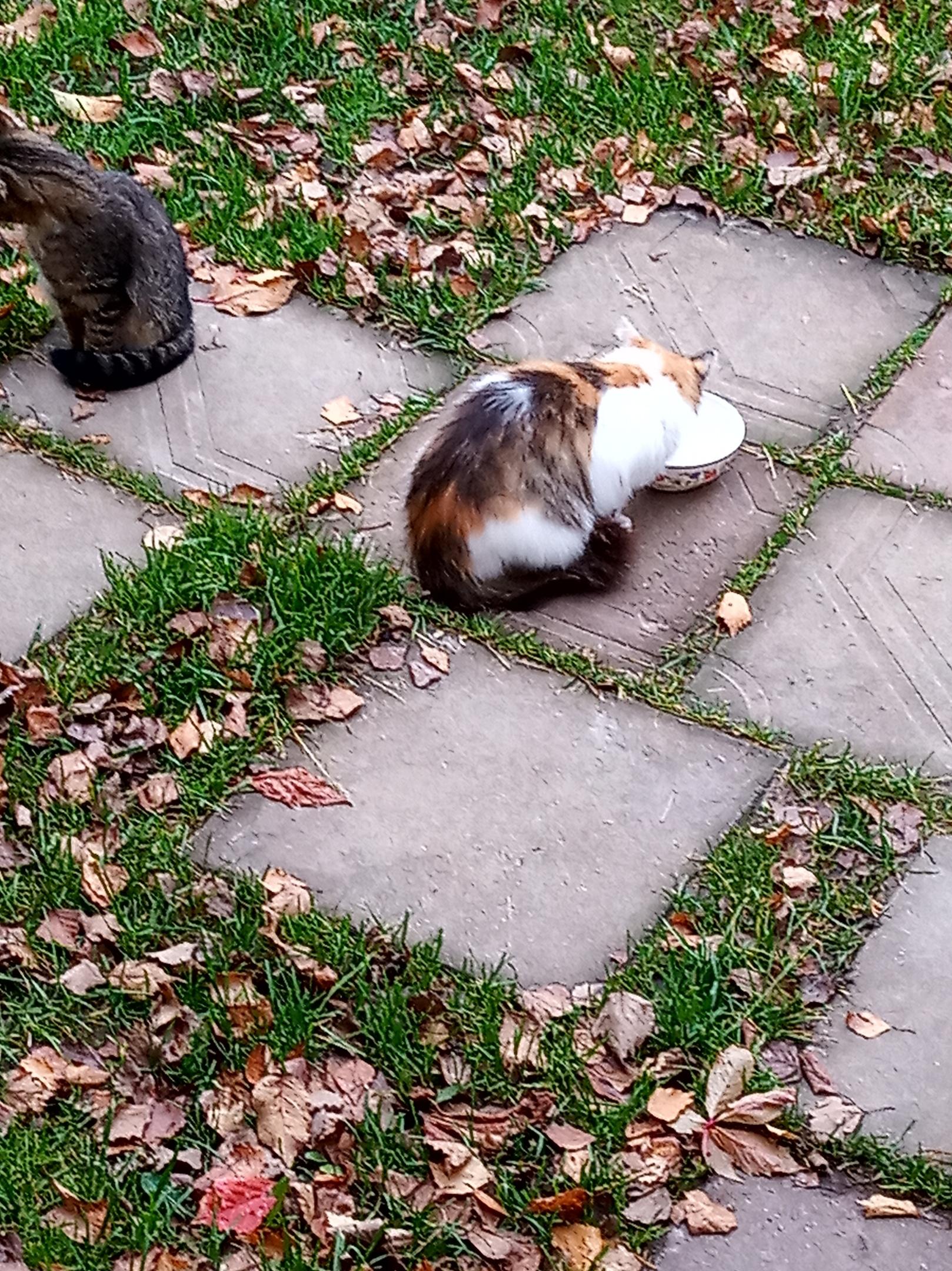 Добрый день, от дачников достались кошка и