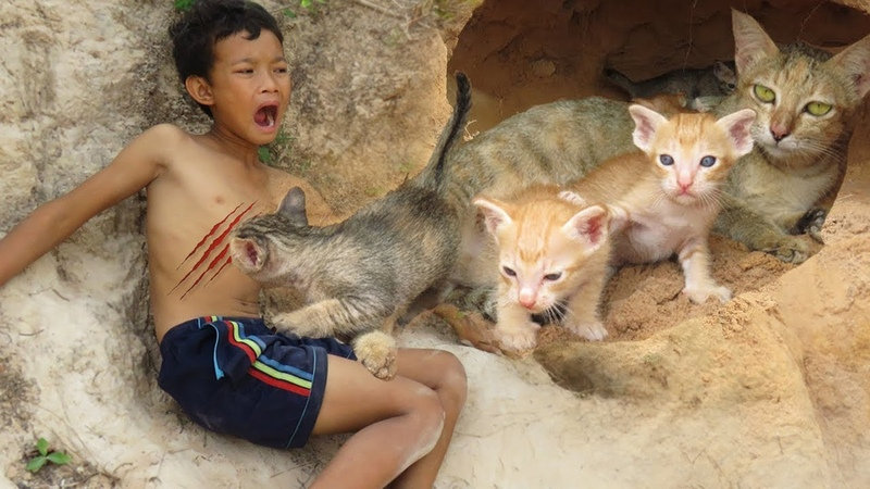 Primitive Technology: Found Cute Baby Wild Cats Lose Home In Cave And Bring Them To Their Mum