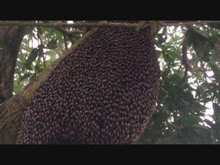 Танец пчелиного роя - Интеллектуариум | наука и образование