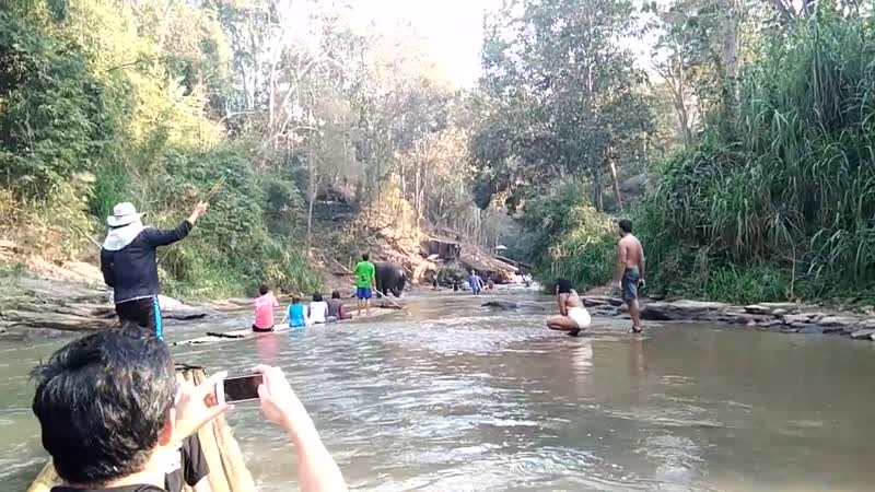 слон опрокинул плот с туристами