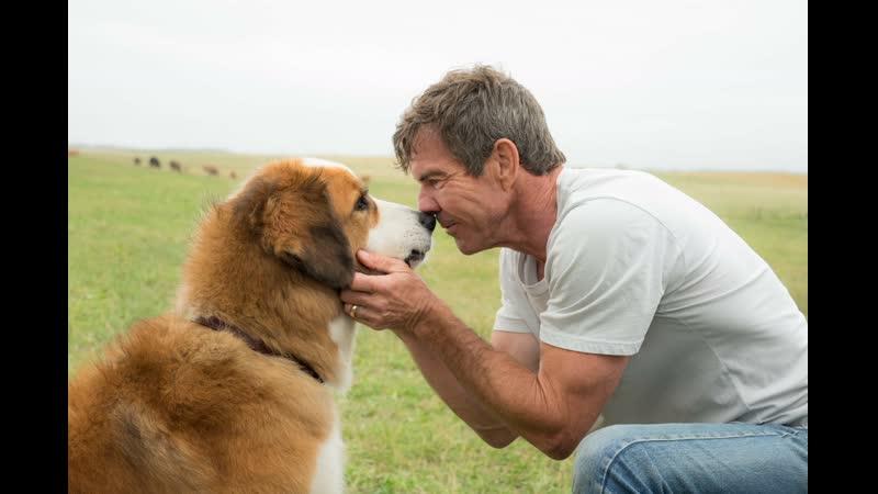 Собачья жизнь 2 Трейлер 2019