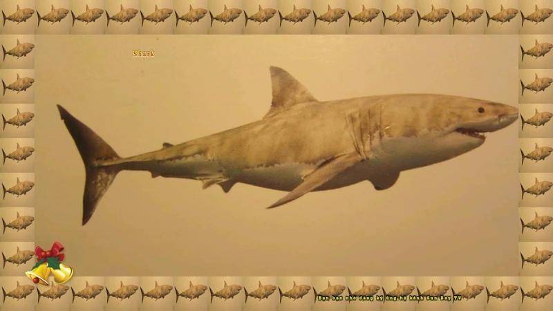 Các con vật sống dưới nước cho Bé nhanh biết nói Con cá