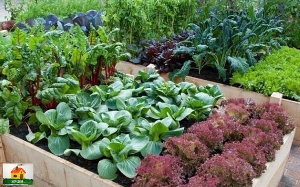 Чередование культур в огороде (что можно сажать после чего)